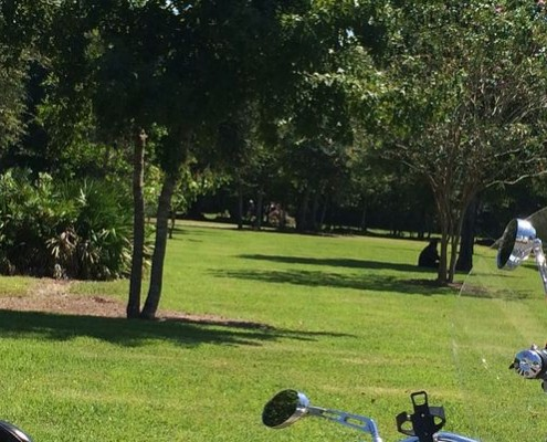 A man in St. Johns County Thursday died after he was shocked trying to clear a tree from an electric line.